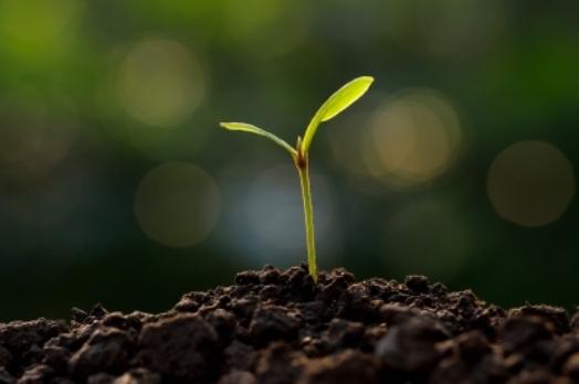 Boas notícias para a agricultura biológica
