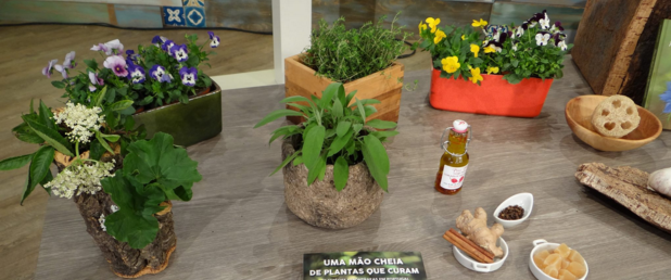 Alie-se ao poder das plantas no combate às doenças de inverno
