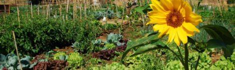 Hortas urbanas e comunitárias: no caminho da sustentabilidade